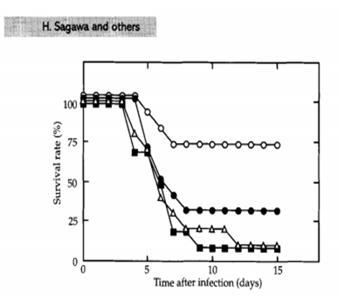 Figure 6: Results from a lab test on groups of mice: Survival rates of those immunized with the headless-HA protein (white circles) are significantly greater than the two control groups, as well as headless HA-proteins that have undergone heat treatment. Source: Sagawa, H., Ohshima, A., Kato, I., Okuno, Y. & Isegawa, Y. The immunological activity of a deletion mutant of influenza virus haemagglutinin lacking the globular region. J. Gen. Virol.77, 1483–1487 (1996).